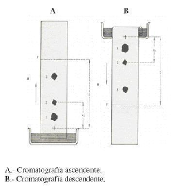 20070409181639-cromatografia.jpg